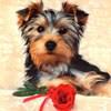 Аватар для Вика Лаптева